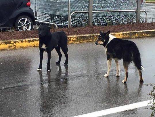Cani persi