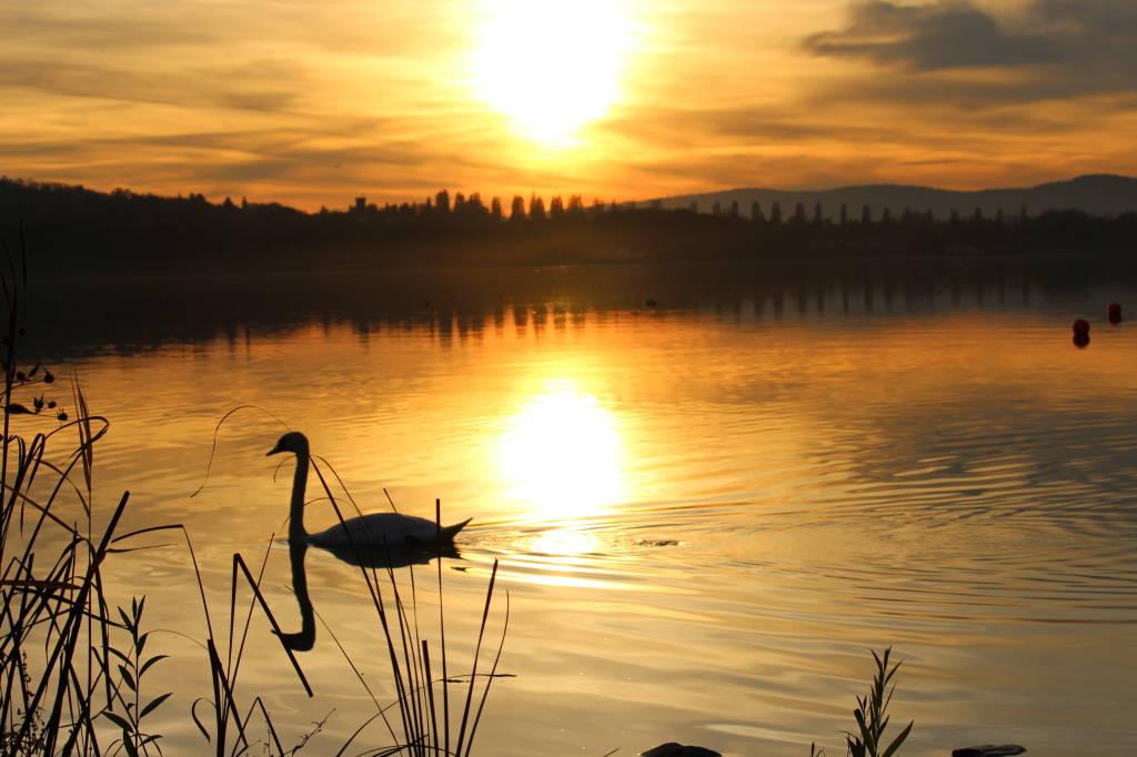 Il cigno ed il tramonto