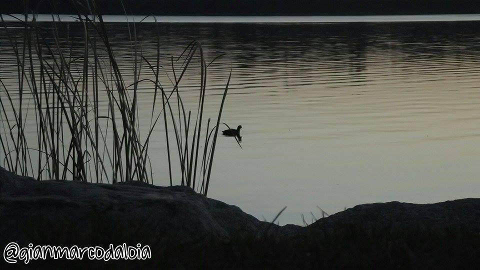 Il Lago a Gavirate
