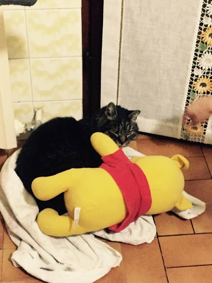 Trovata una gatta