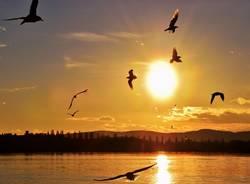 Gli uccelli del sole
