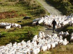 Pecore e pastori