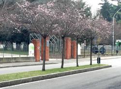 Primavera fiori alberi busto arsizio
