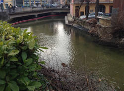 Pulizia del fiume Bardello