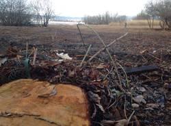 Sopralluogo all'oasi disboscata