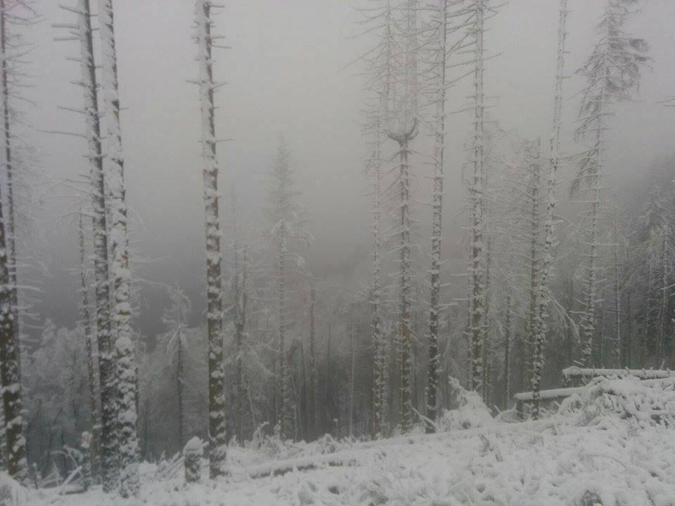 Timidi fiocchi di neve sulla Valganna