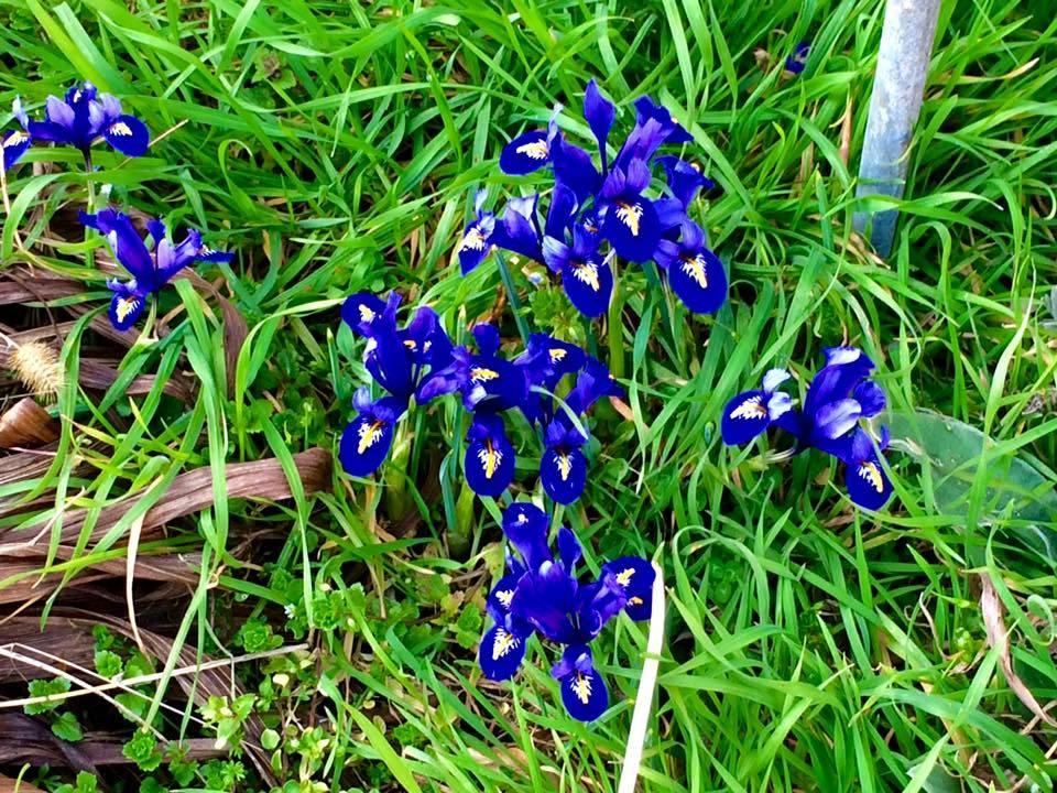 Tracce di primavera a Casciago