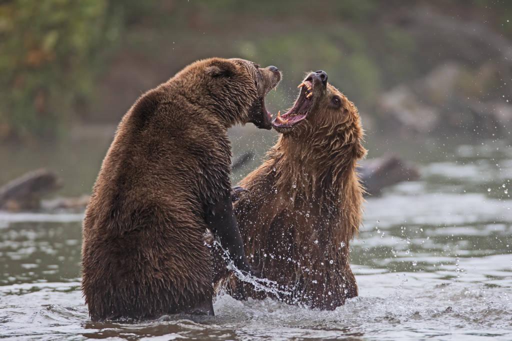 Viaggio nella terra degli orsi