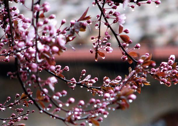 Risultato immagini per primavera uggiosa