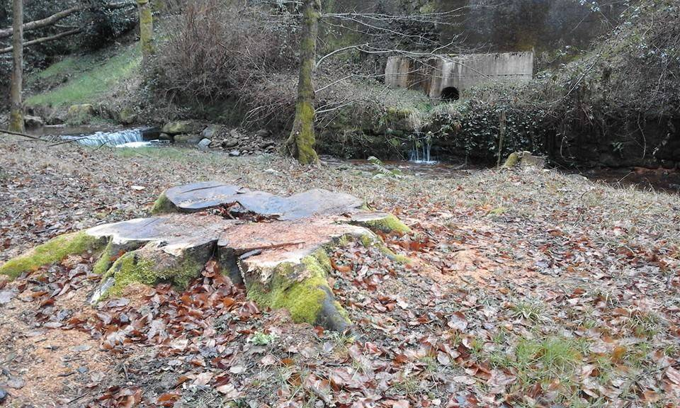 cadegliano viconago, parco argentera, taglio piante marzo 2016