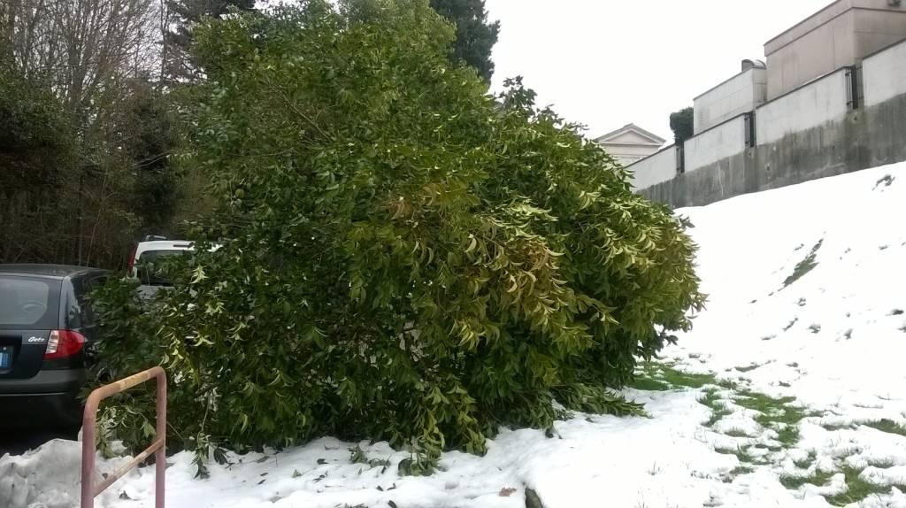 Nevicata del 5 Marzo 2016