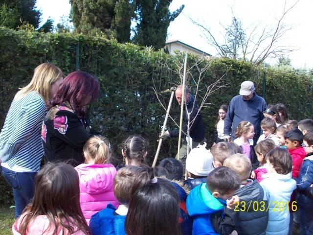 Festa degli alberi a Bodio Lomnago