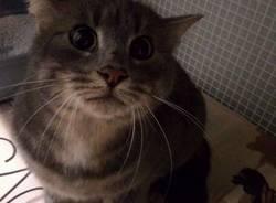 gattino gatto recuperato Samarate
