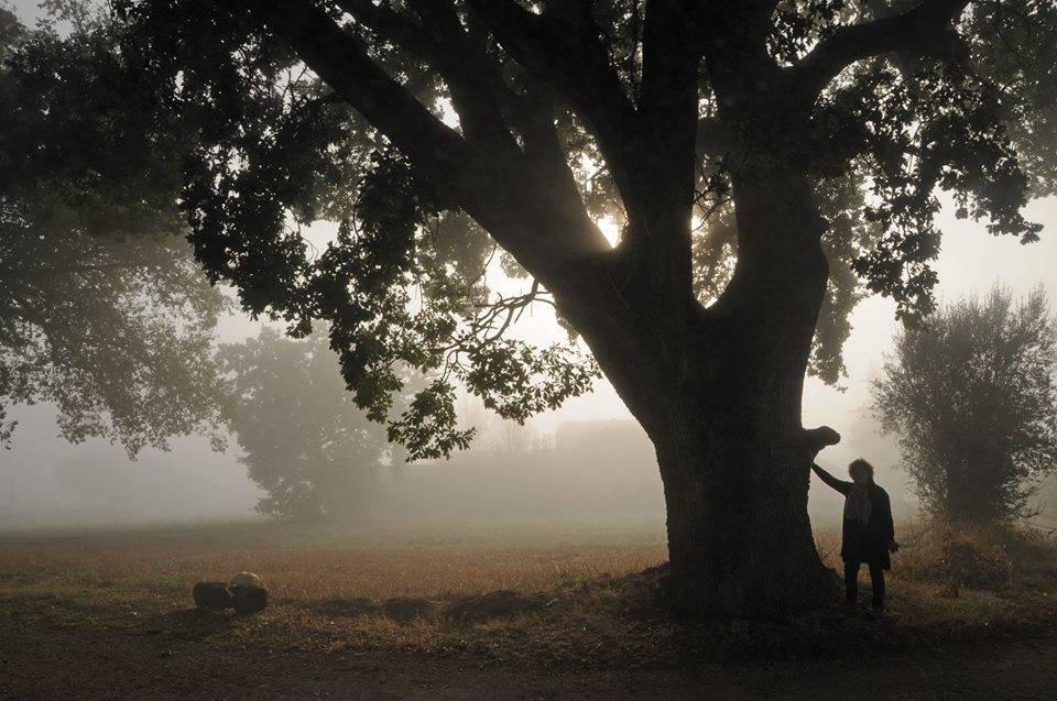 L'albero dell'anno