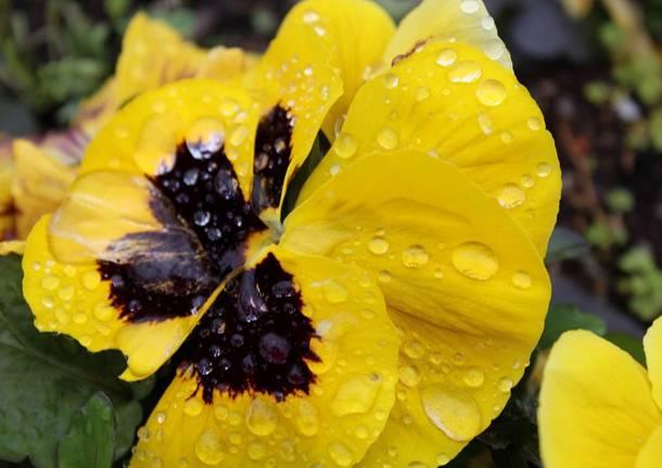 La pioggia di marzo - foto di Dino Dettori
