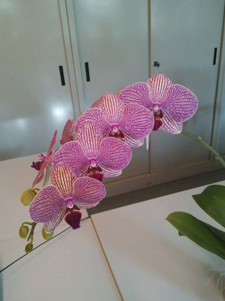 Le orchidee di Angela