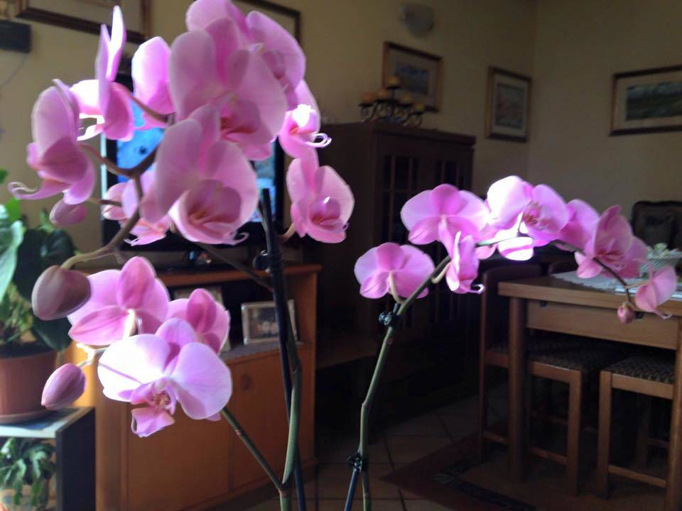 Le orchidee di Loredana - foto di Loredana Luini