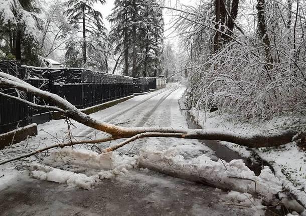 Neve di marzo: pregi e difetti