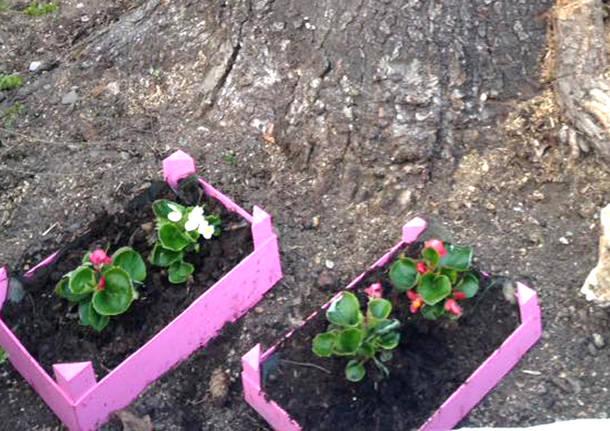 porto ceresio - fiori rubati