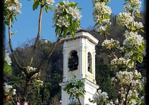 Primavera a Maccagno - foto di Laura Monaco