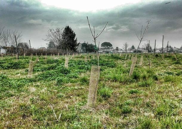 Sopra Pedemontana il cimitero di alberi rimane