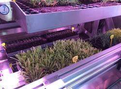 Zephyr la fabbrica delle piante