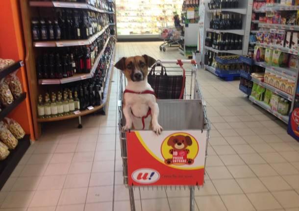 a luino il supermarket col carrello per cani