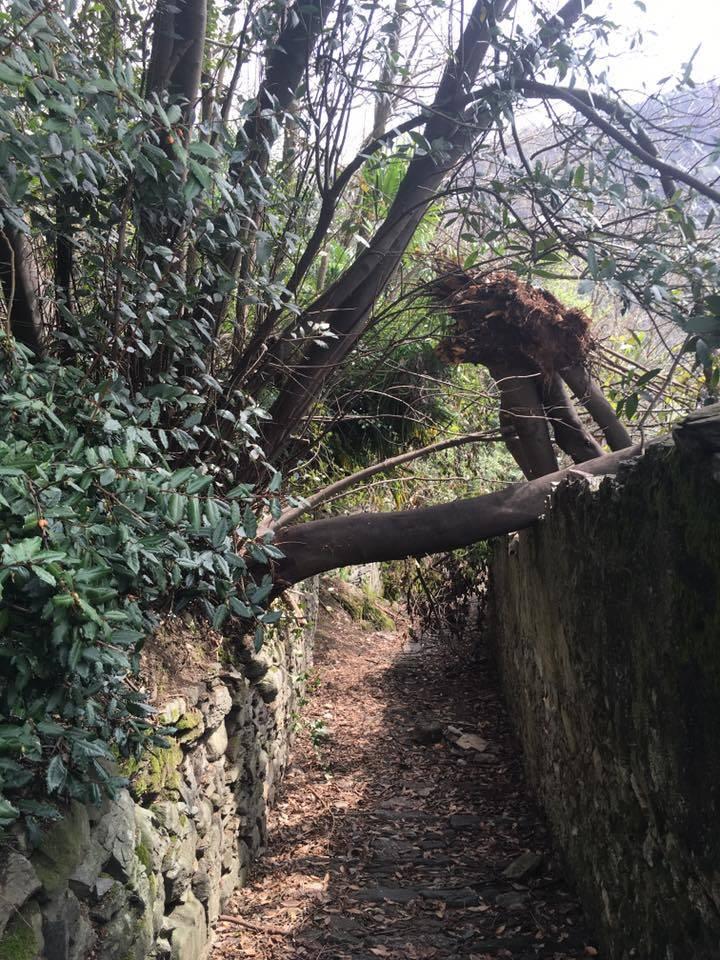 Alberi caduti sul sentiero di Colmegna