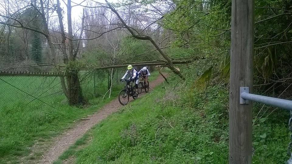 Alberi sul sentiero