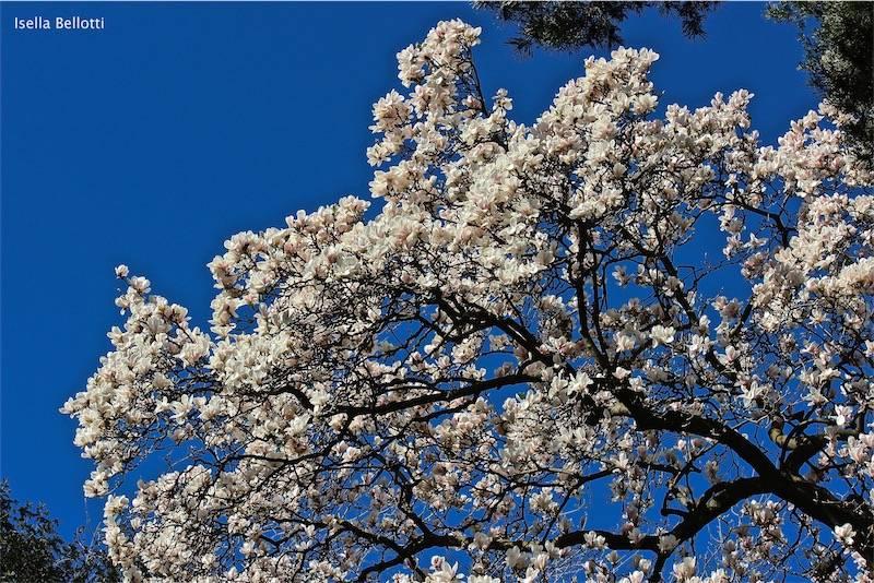 Primavera nel Varesotto