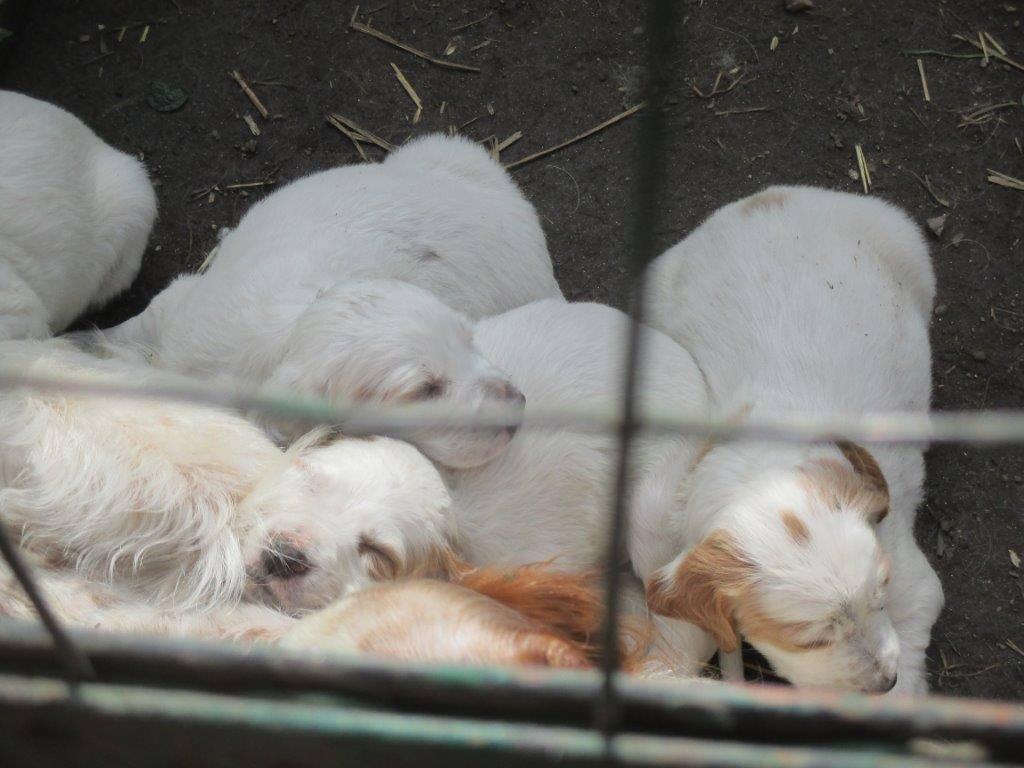 Una nidiata di cuccioli.....