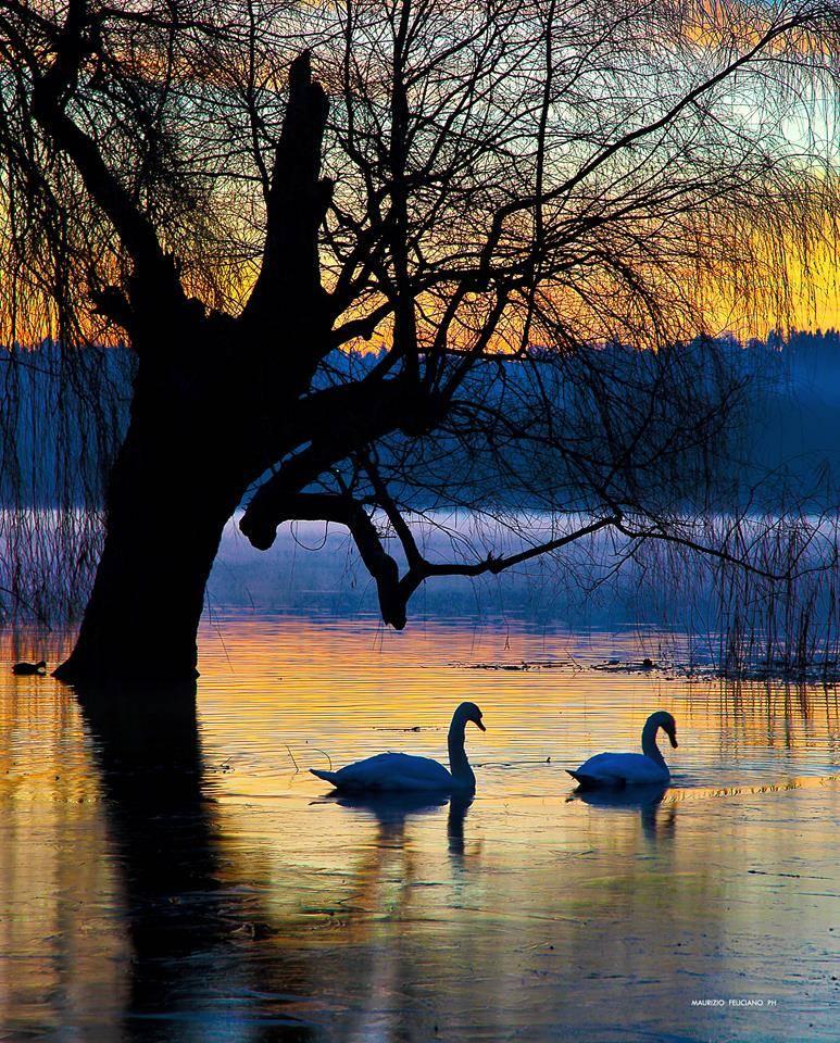 Il Lago...racconta