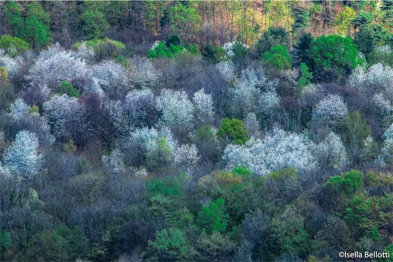 Boschi del Varesotto in primavera