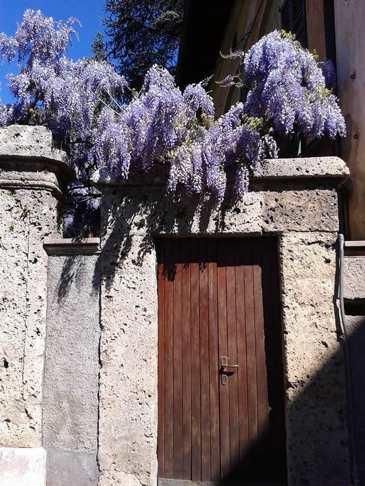 Una porta e il glicine