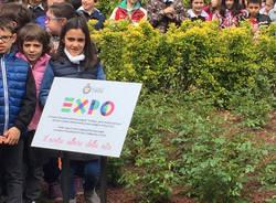 Dalla Cina il gelso per le scuole di Cairate