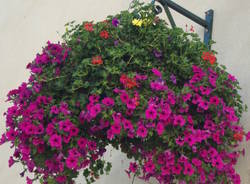 fiori generiche