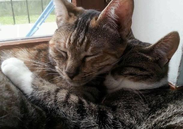 gattini gatti