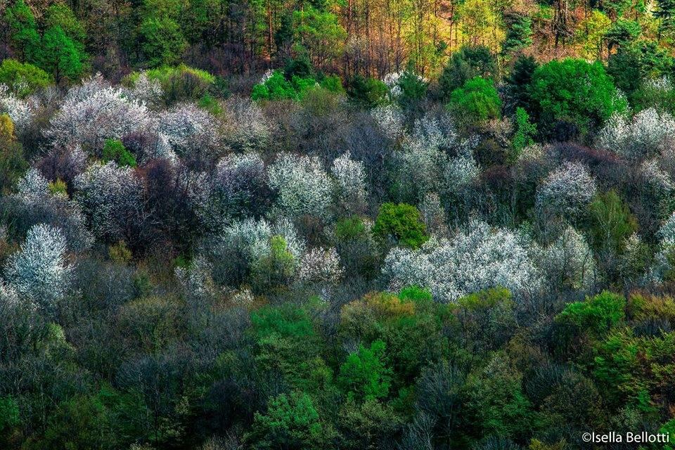 I boschi... in fiore - foto di Isella Bellotti