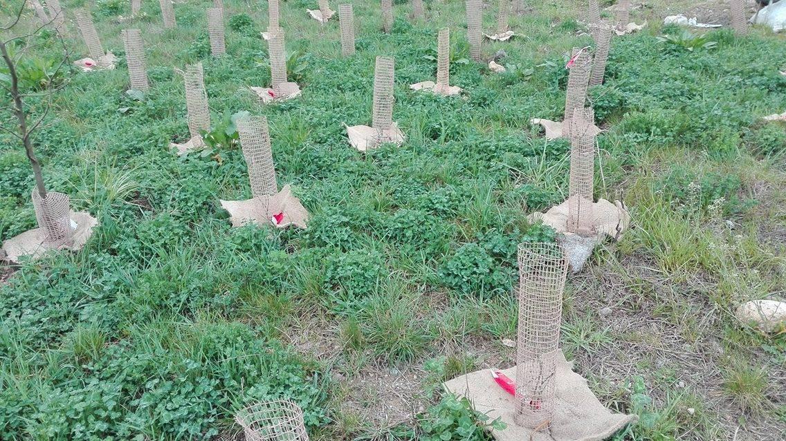 I nuovi alberi per Pedemontana