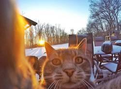 Il gatto che ha imparato a farsi i selfie