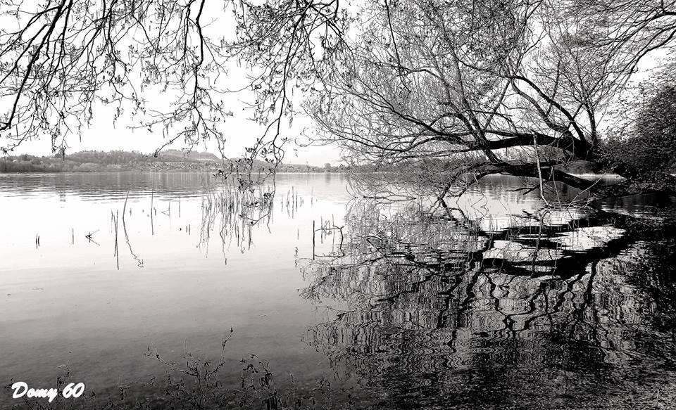 Il lago di Comabbio in bianco e nero - foto di Domenico De Lucia