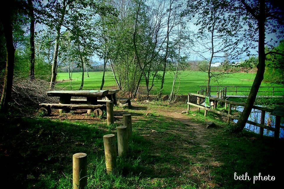 Il sentiero delle rane nel Parco Pineta - foto diElisabetta Vitellozzi