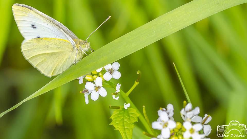 insetti insetto