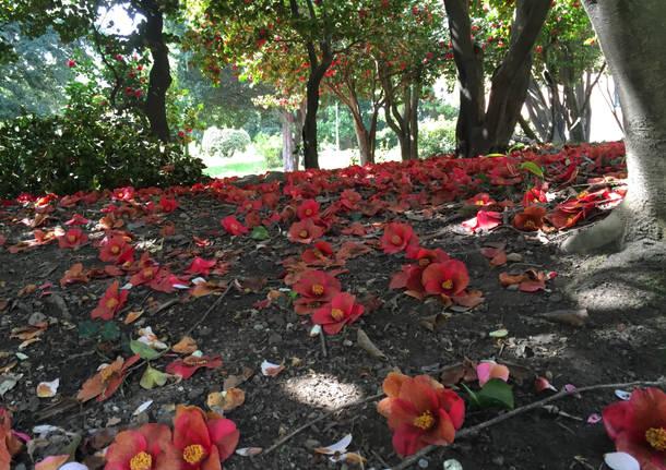 Mattina di primavera a Villa Mirabello