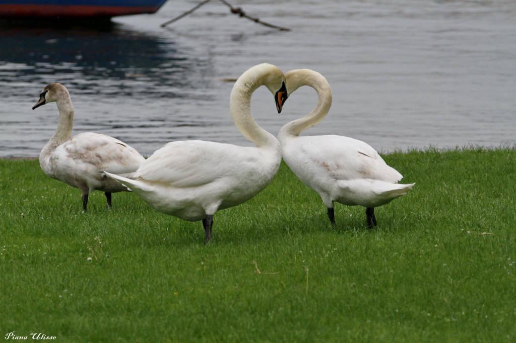 Tenerezze in riva al Lago