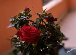 Una rosa per farla innamorare