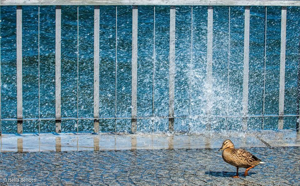 Vento - Foto Isella Bellotti