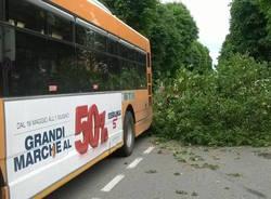 Albero cade sul bus