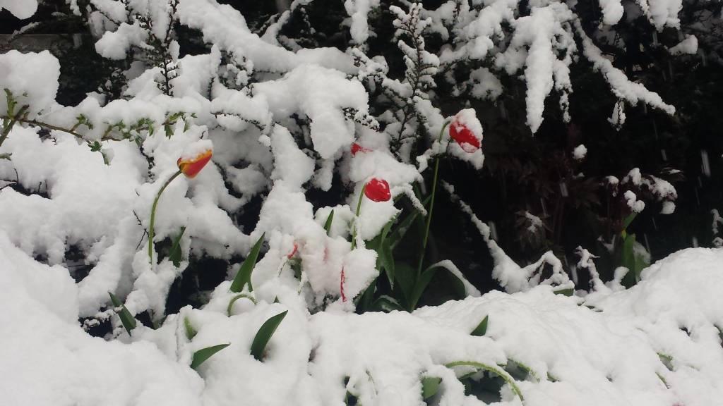 La neve a fine maggio