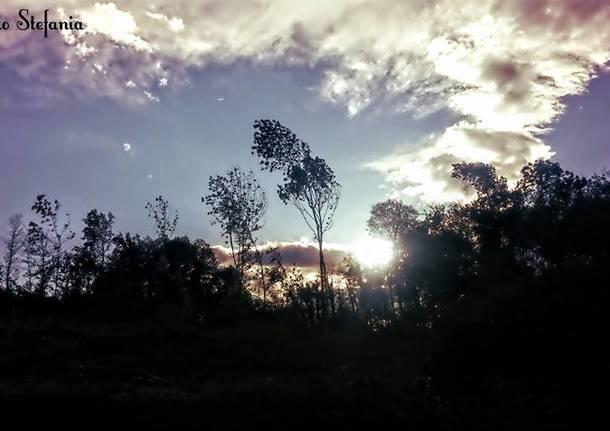 Il vento tra gli alberi